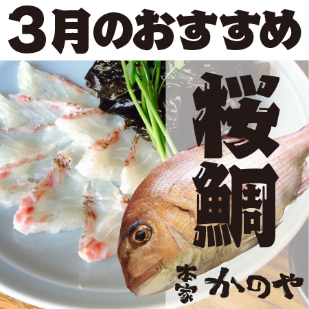 本家かのや [3月のおすすめメニュー!]