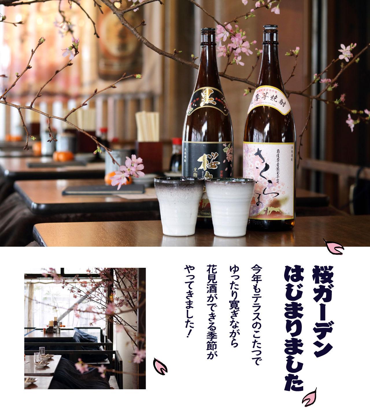 kanoya_1903_sakura.jpg
